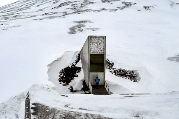 50 000 Seeds Deposited To Doomsday Vault Housing World S Largest