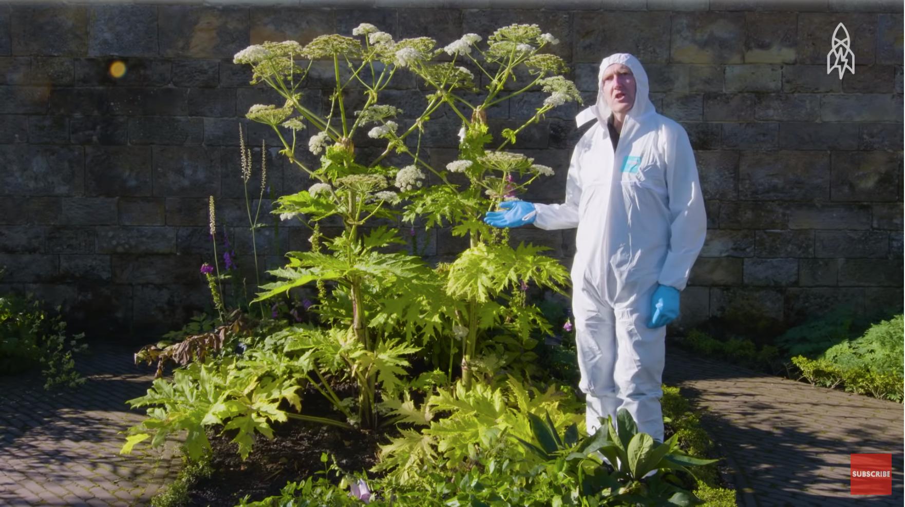 The World S Deadliest Garden Lies Inside An Ancient English Castle Upworthy