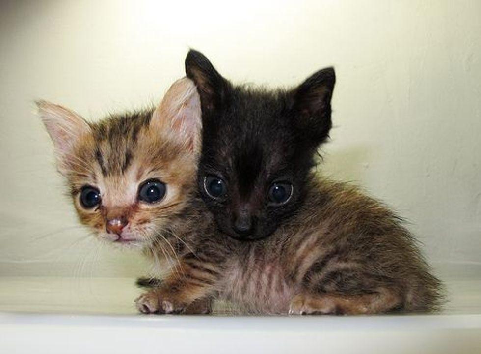 Two Itty Bitty Rescued Kitties