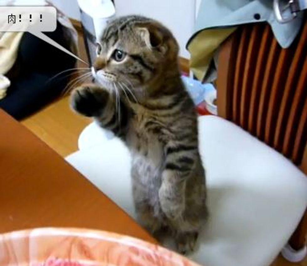 Kitten Offers Help in Kitchen