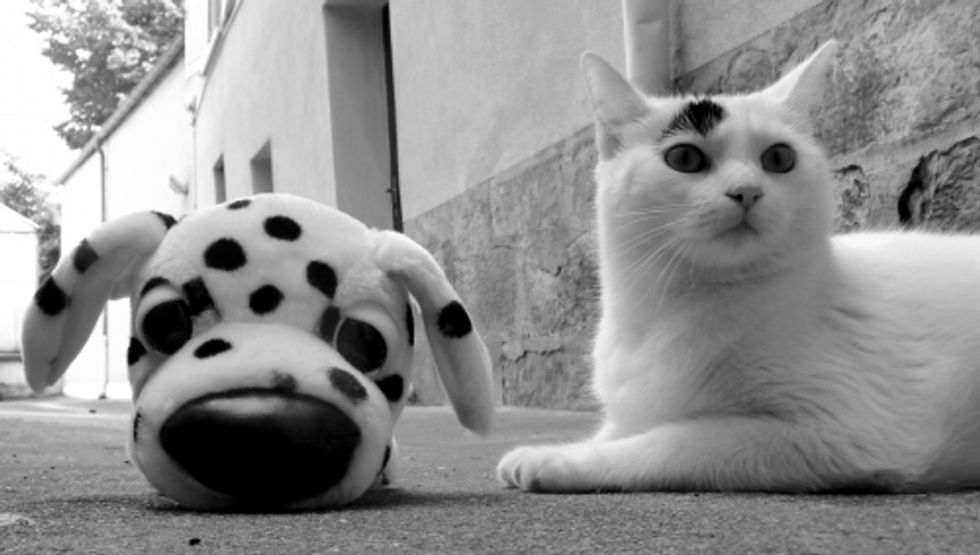 Mimo, the Cat with a Black Spot