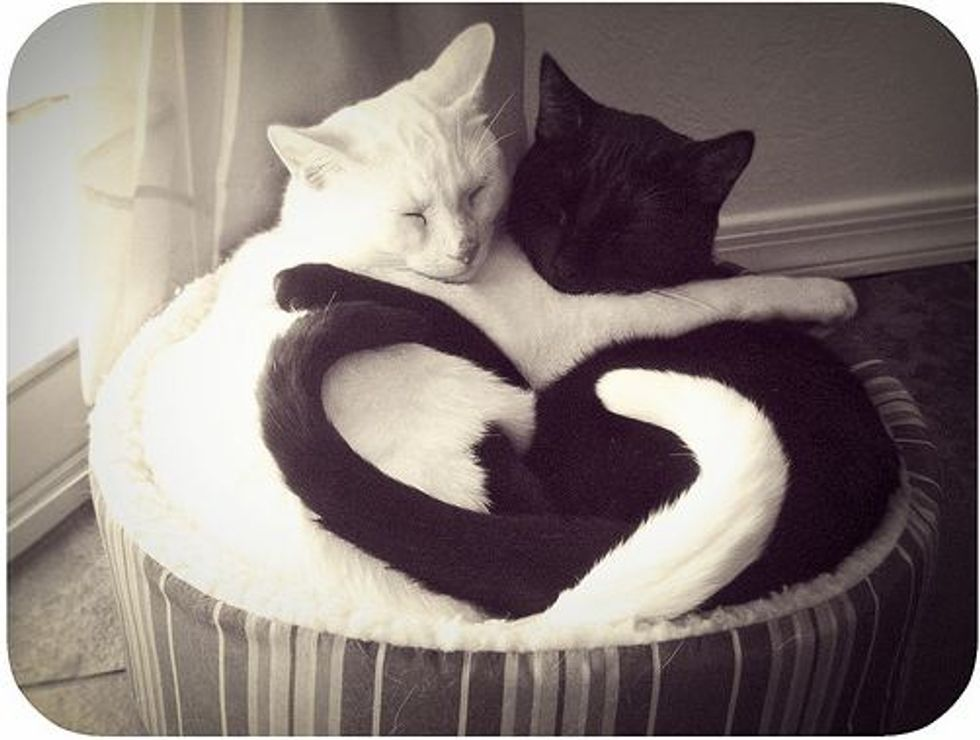 Love in Black and White
