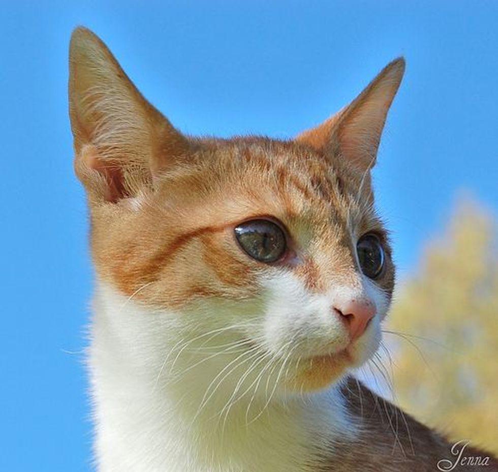 Bullis the Cat, a Mama's Girl