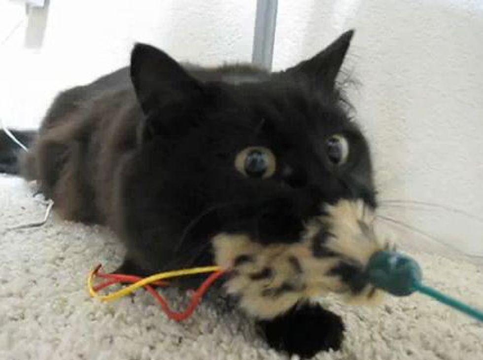 Tenacious Kitty