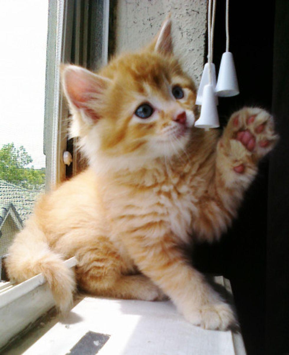 Chester A Garfield