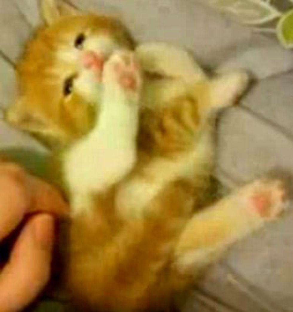 Kitten Loves to Clean