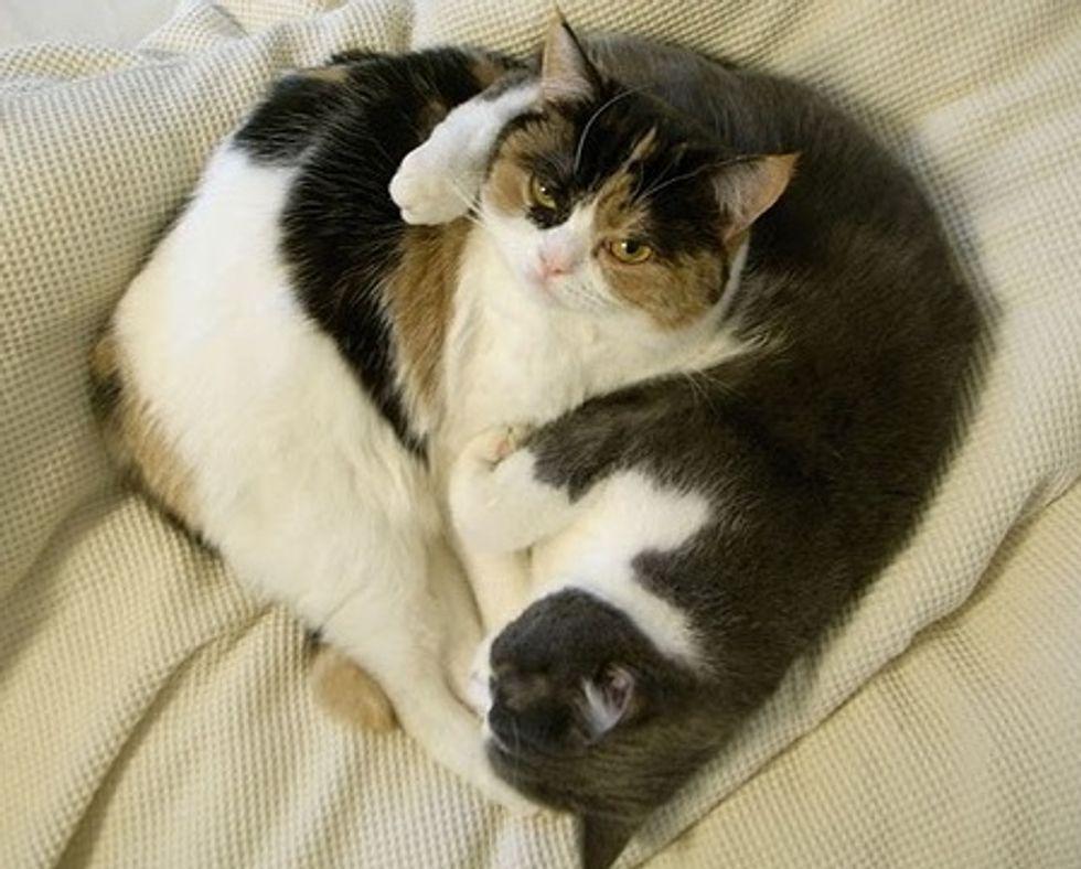 Two Adorable Cat Siblings