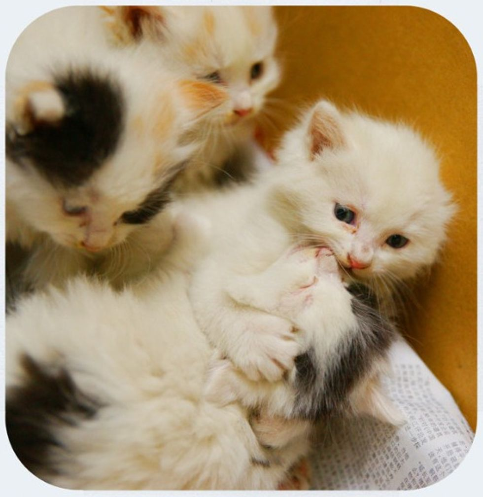 A Litter of Rescued Feral Kittens