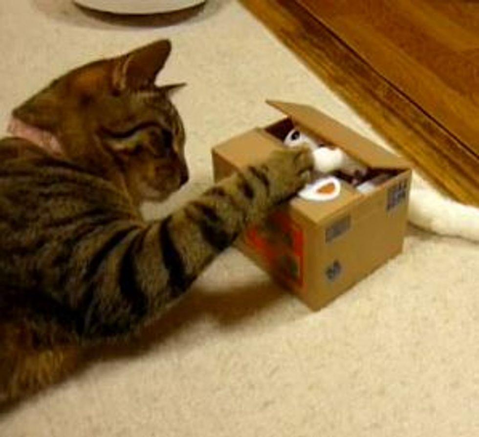 Cat Meets 'Cat' Toy Bank
