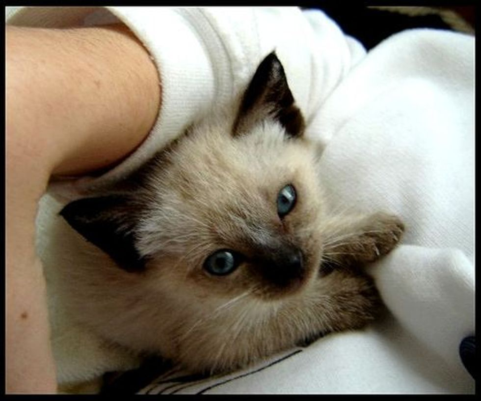 Rescued Kitten Touched Dog Lovers' Hearts