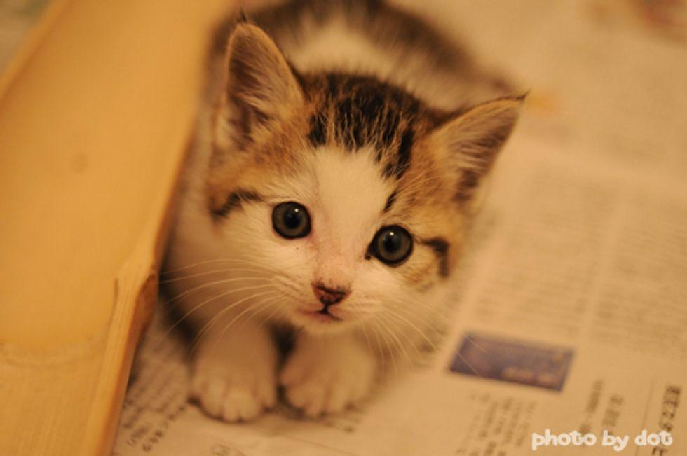 Cute Kitten vs Paper Bag