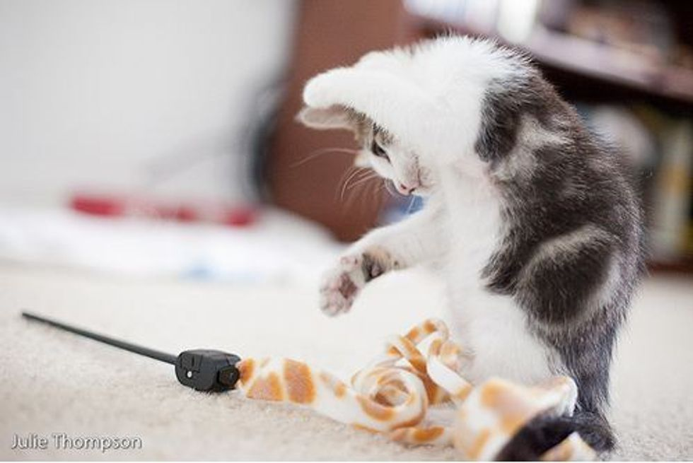 Canon the Kitten, Love at First Sight