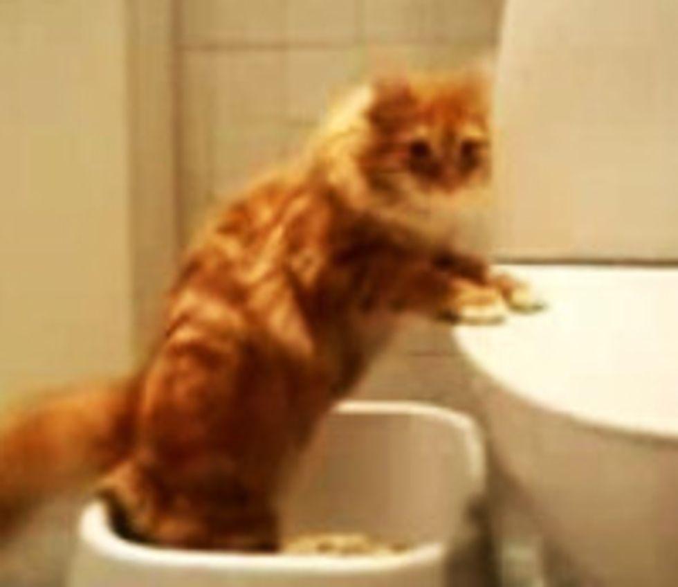 Cat Drummer