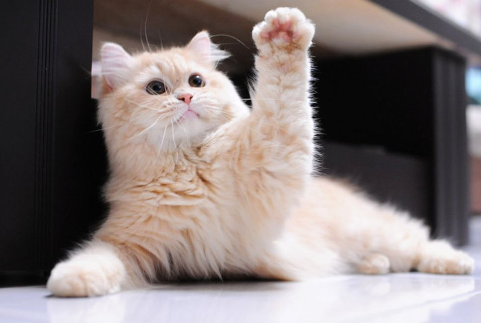 Ginger Kitty Gives High 5
