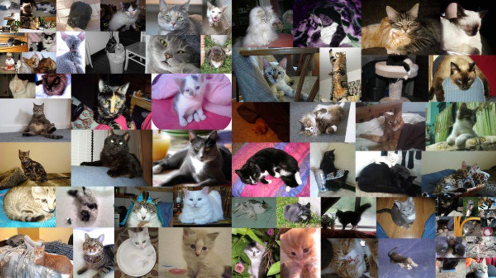 Voting for June Cat/Kitten of the Month Begins