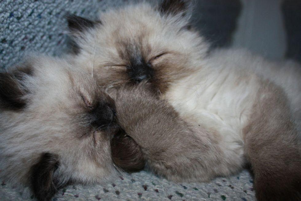 Kitties Sharing Secrets
