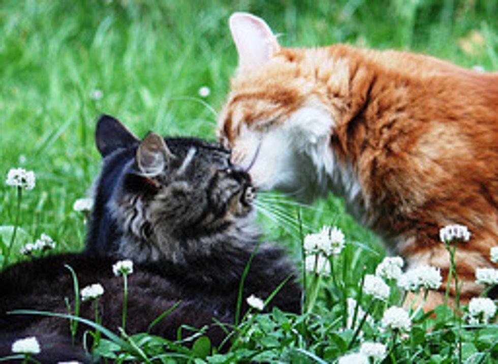 Love Between Sam and Alfie