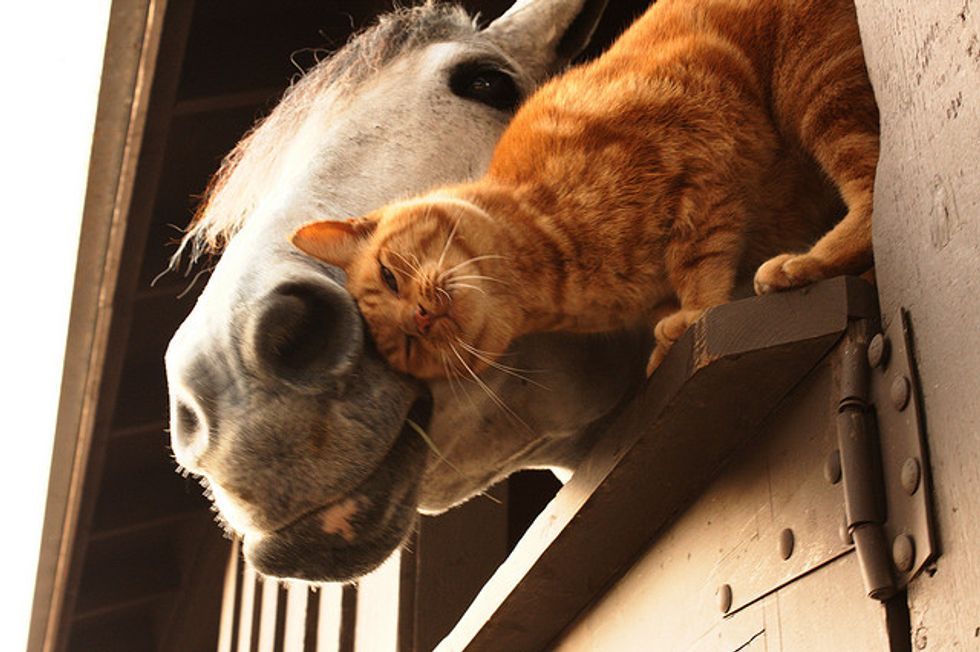 Iggy the Cat and Oprah the Horse