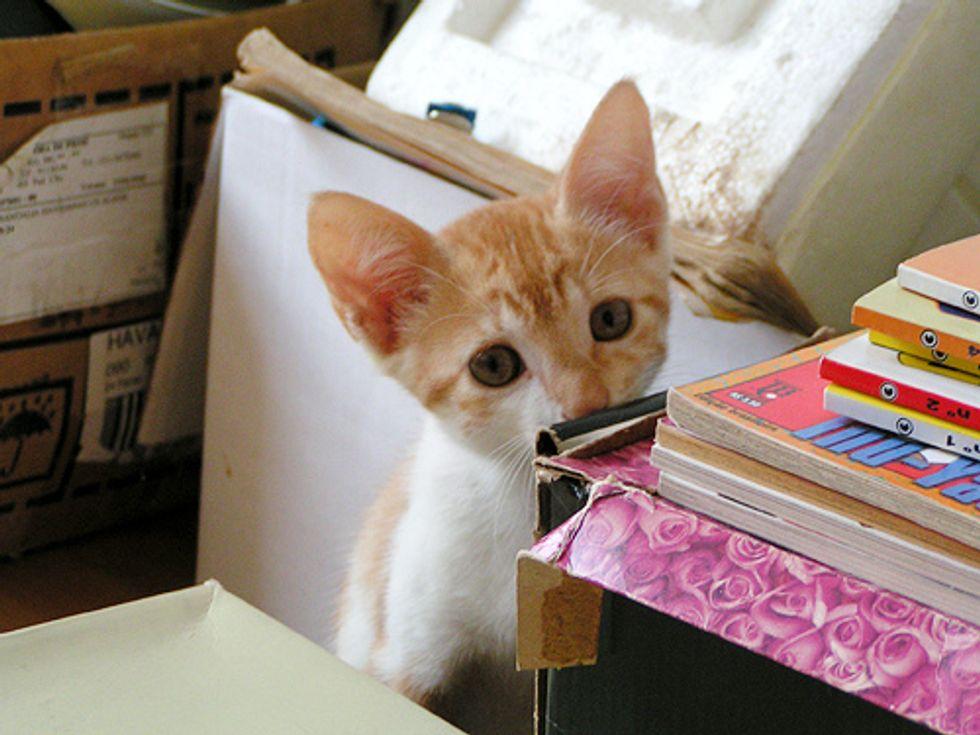 Bo the Cat, Sweet like Honey