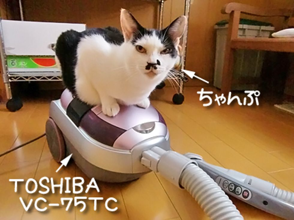 Kitty Really LOVES Vacuum