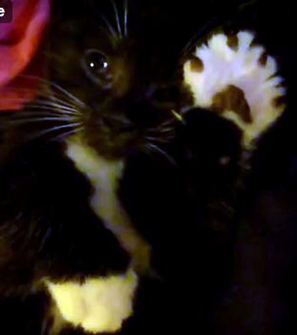 Kitten Gives Air Massage