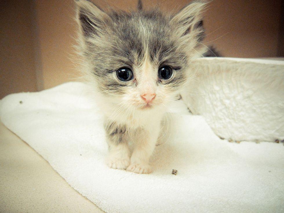 Little Rescued Kitten's Message