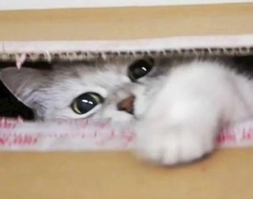 Hamu the Cat Gets Her Treats