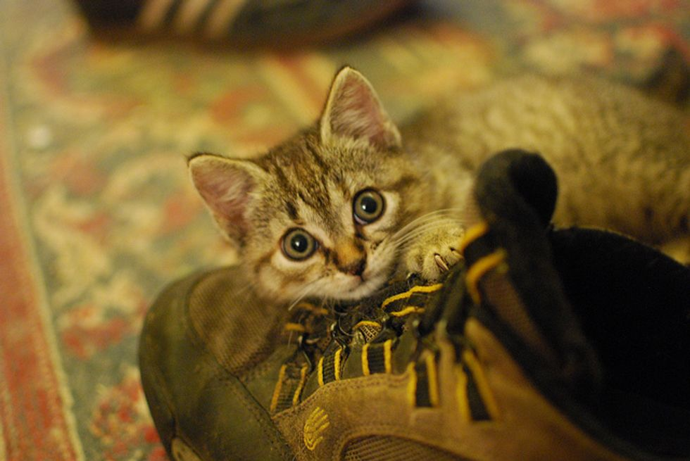 Ivy the Kitten Rescued from Rocky Ledge