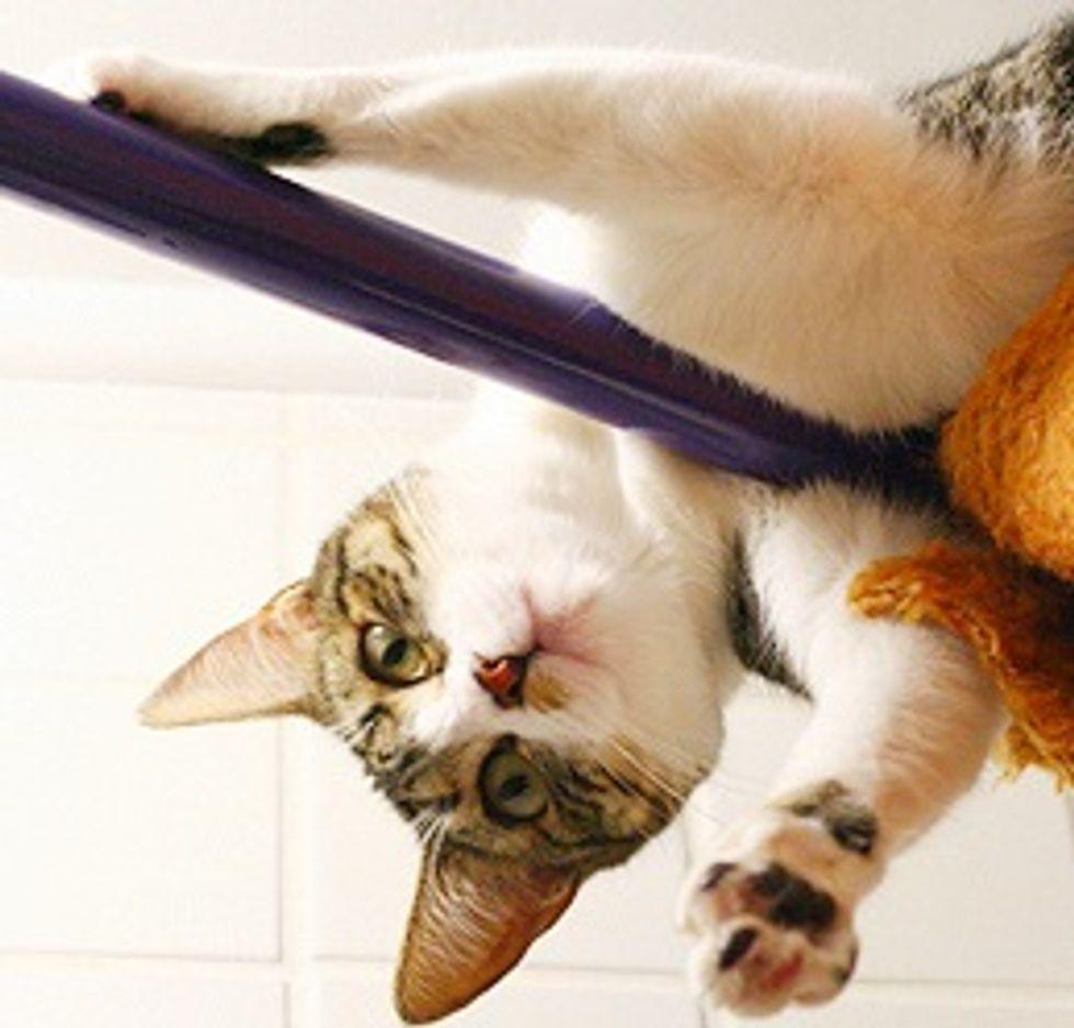 Celeste, the Cat Climber