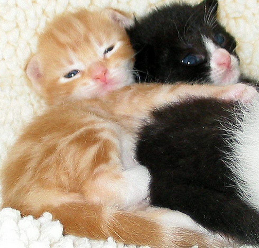 Couple Fostered Over 300 Kitties