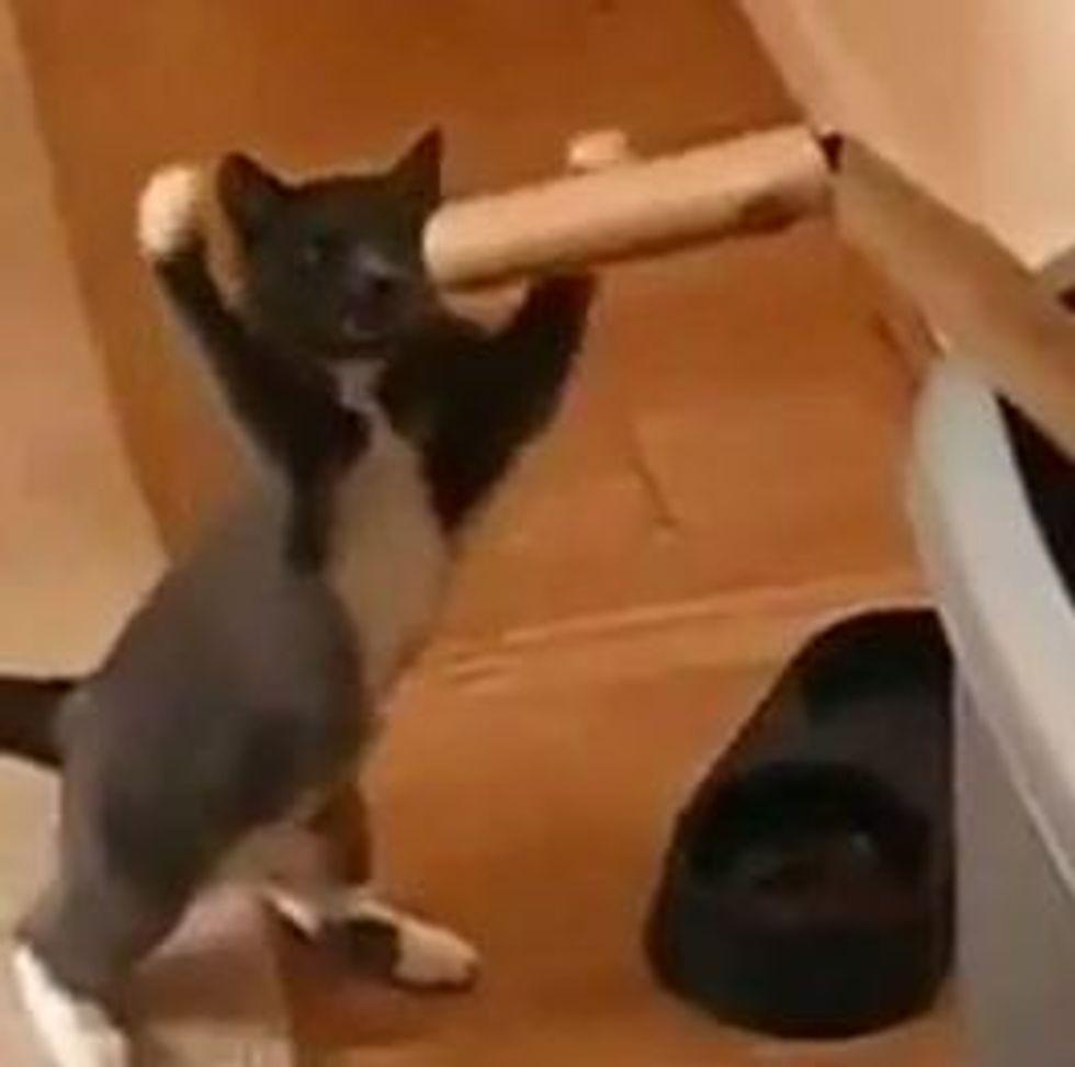 Kungfu Kitty