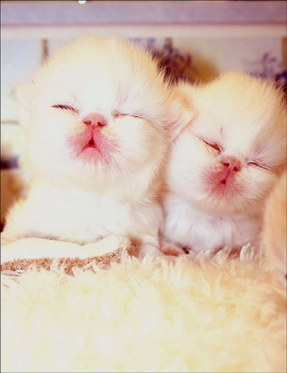Sleepy and Cuddly Caturday