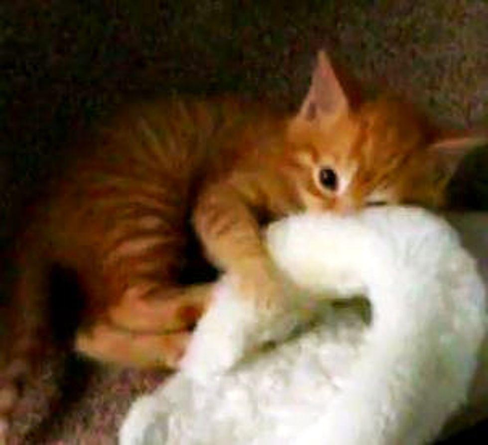 Ginger Kitten vs Slipper