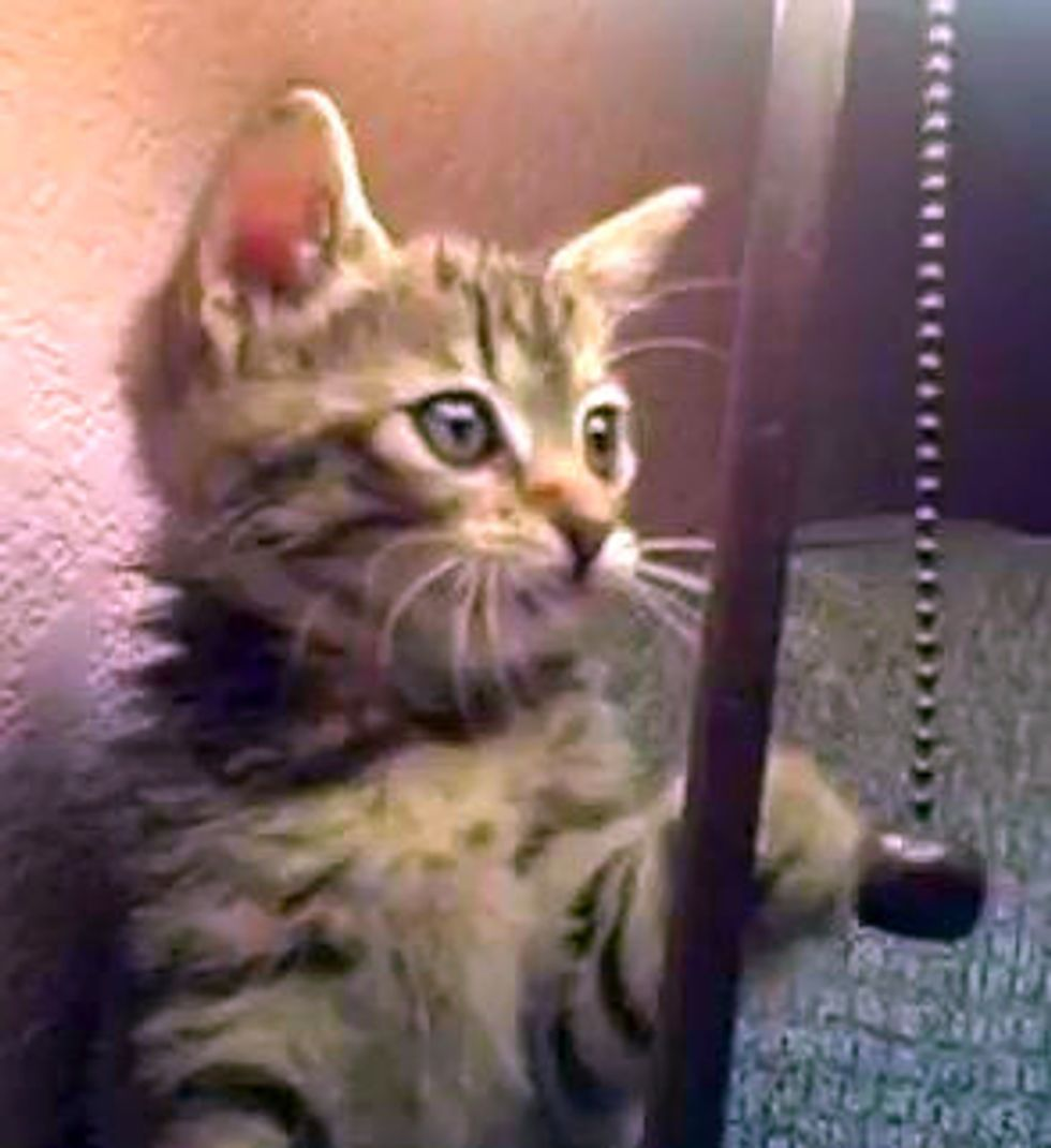 Kitten Plays Tetherball with Lamp Chain