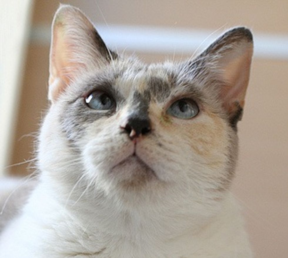 Lua the Cat, a Little Angel