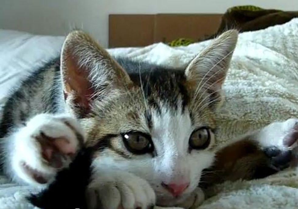 Sleepy Yoga Kitten