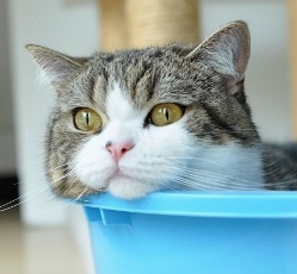 Maru the Cat Who Defies Gravity