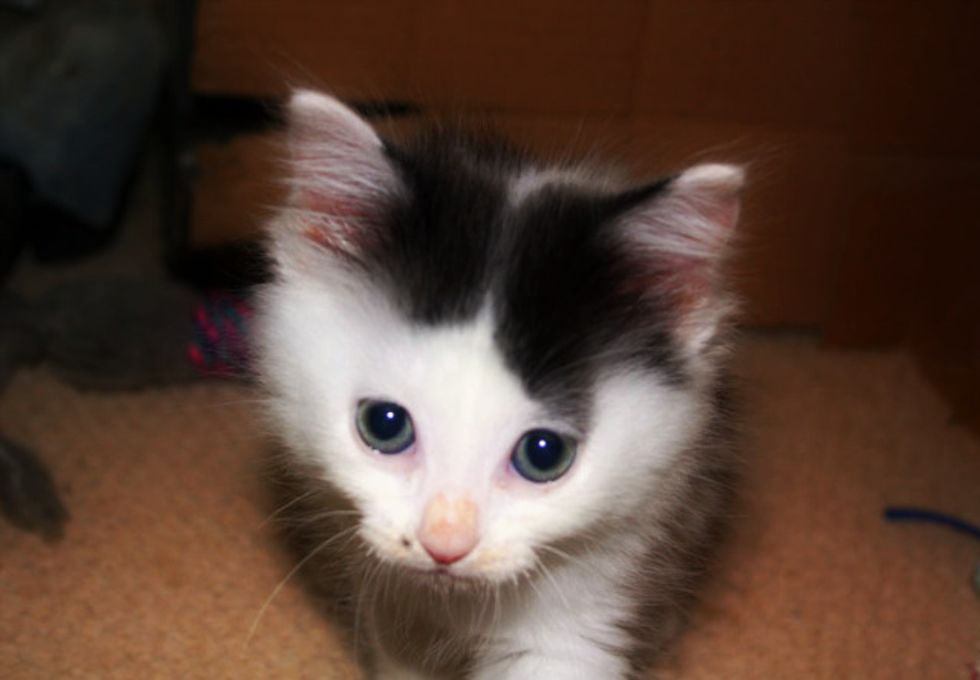 4 Foster Kittens: Daisy, Sissy, Hits and Dave