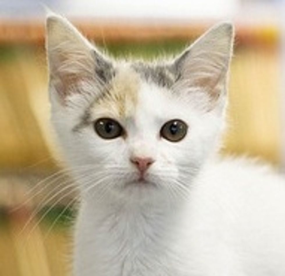 Rescued Kitten Found Foster Home at Animal Hospital