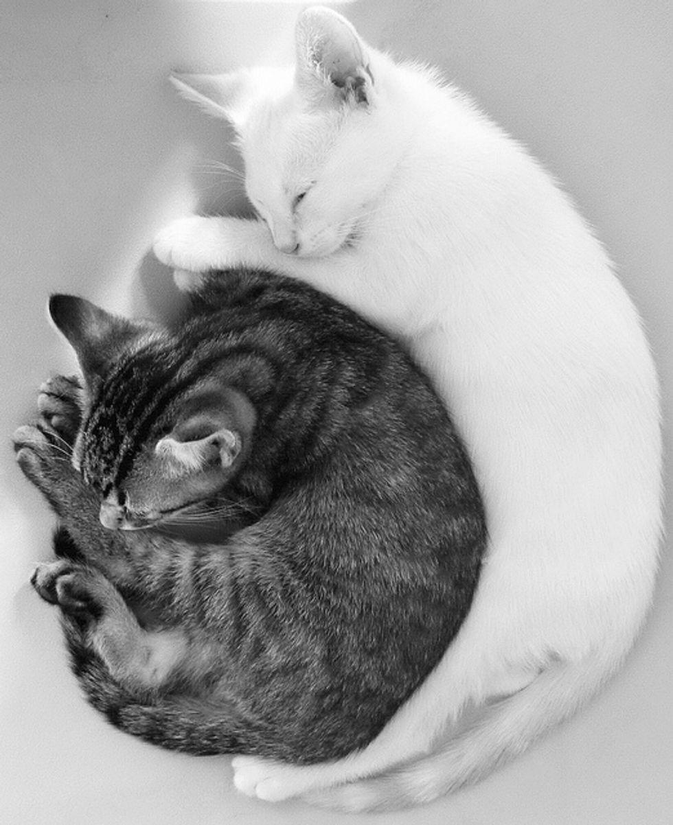 Cute Cuddly Pair