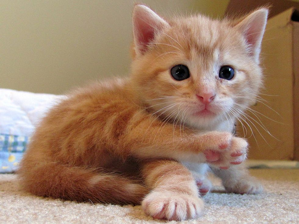 Frito the Ginger Foster