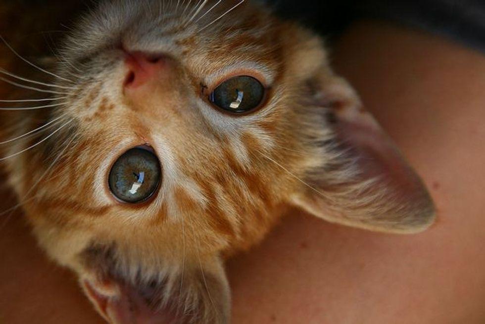 Rescued Cat from Jordan Found Home in Canada