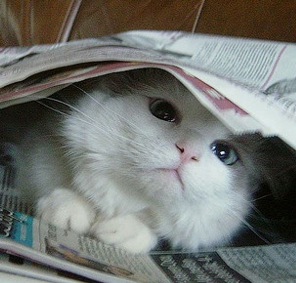Kitten Plays with Newspaper