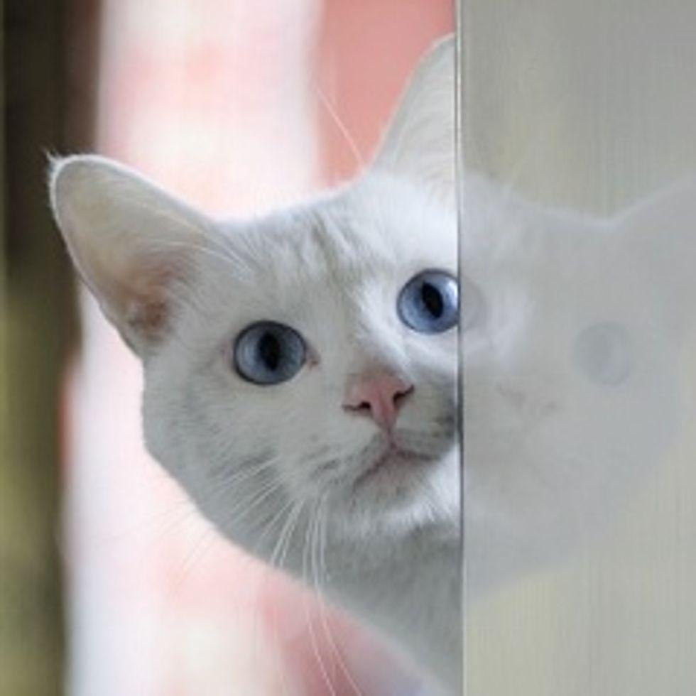 Beautiful White Rescue, Softie