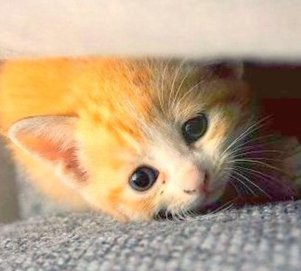 Little Itty Bitty Rescued Kitty