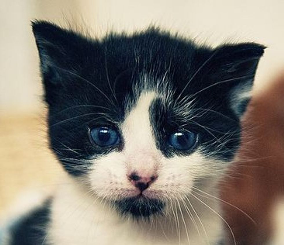 Little Felix
