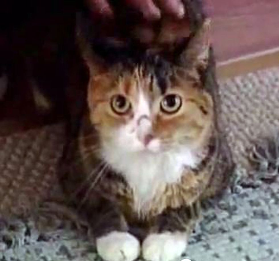 World's Bravest Cat