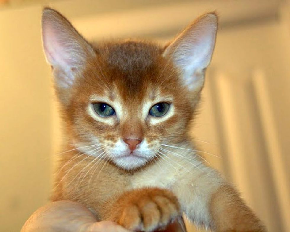 August Cat/Kitten of the Month Results
