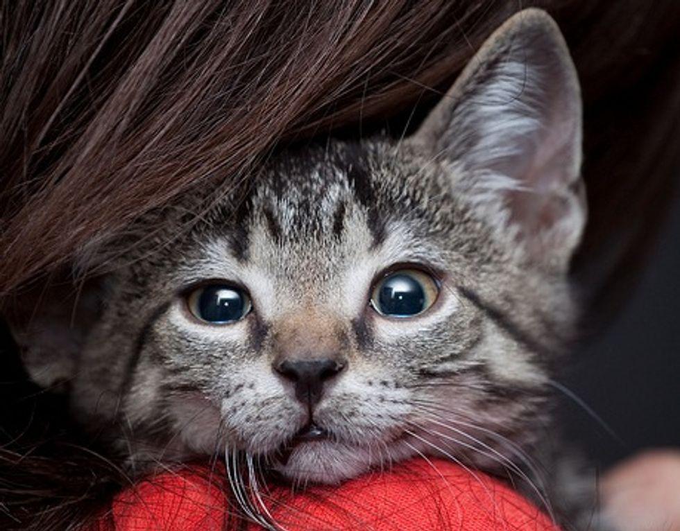 Little Rescued Tabby Kitten Cameron
