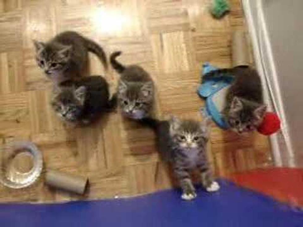 5 Foster Fur Babies